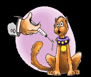 vacunacion mascota
