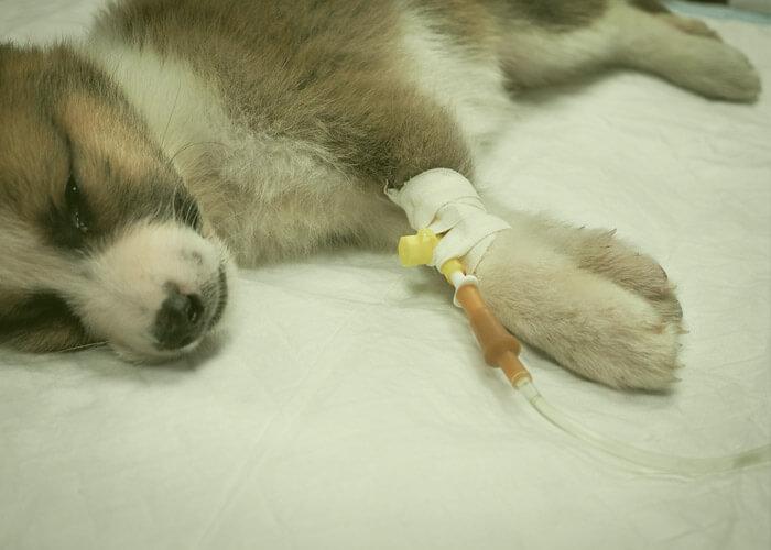 hospitalizacion 24 horas veterinario