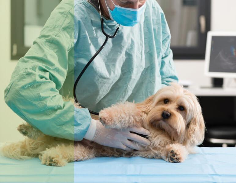cardiólogo veterinario