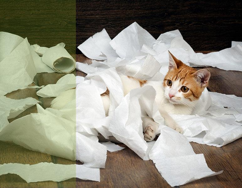 etología gatos