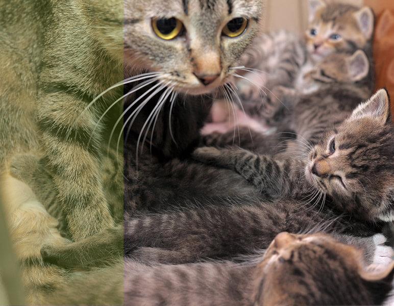 reproducción veterinaria