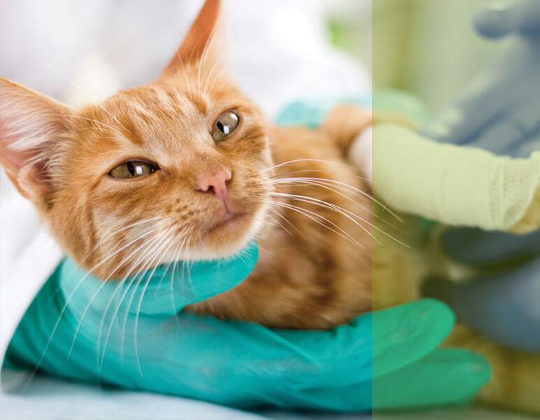 ortopedia veterinaria
