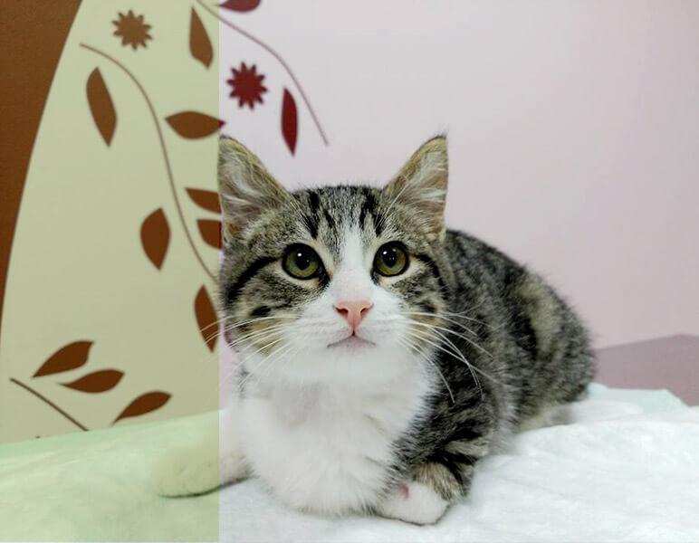 veterinario para gatos